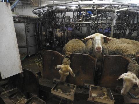 crise agricole salon agriculture aveyron